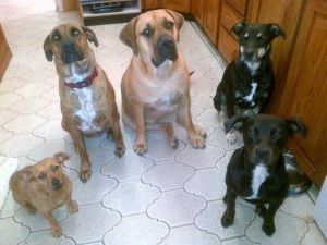Ruby, Lulu, Zena, Cash, and Bony