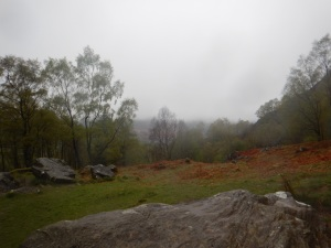 The best view we had. Can barely see the loch through the trees