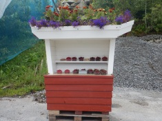 Fruit stands in Lote on the honor system