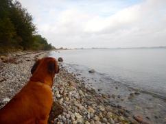 Enjoying the Beach and Scenery with Kibu