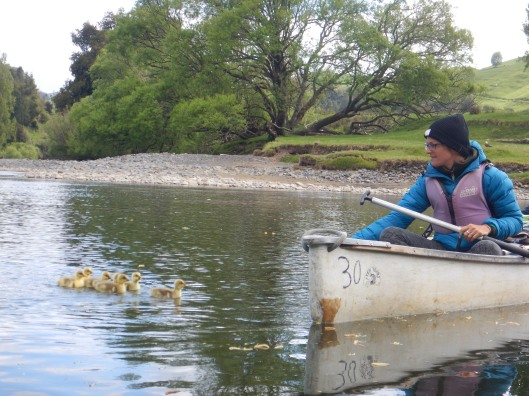 Elin managed to get all the ducklings to come to her